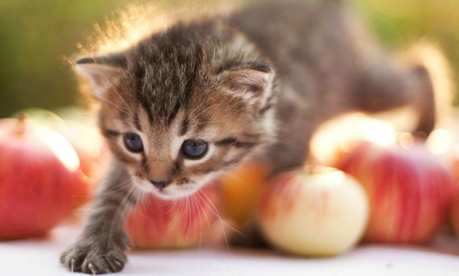 Pet vaccinations are in this kitten's future.