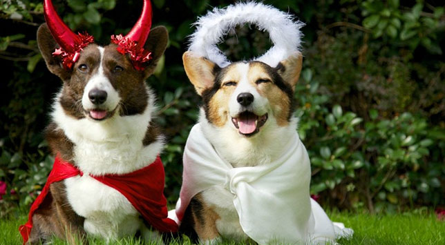 Two Castle Rock dogs dressed for Halloween