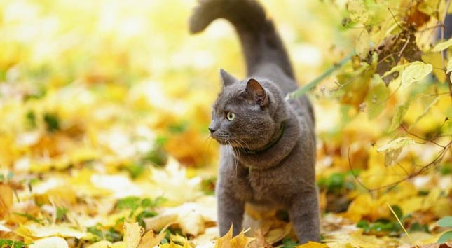 To help reduce the chances of cat diabetes, Shadow is encouraged to play outside.