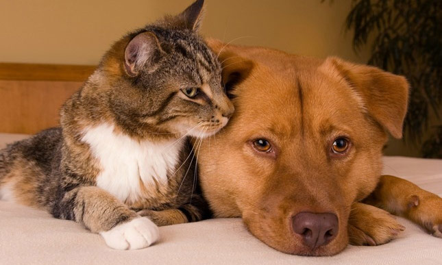 Tigger and Max have been checked for periodontal disease in dogs and cats.