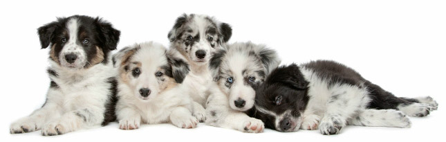 Puppies under the age of one are vulnerable to parvovirus.