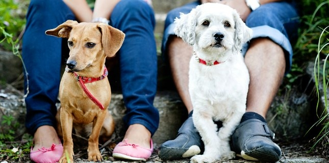 Small dogs, like Wiggles and Snowball, often need more frequent canine dental cleanings.