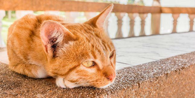 Cinnamon hasn't been her usual social self -- a possible cat renal disease symptom.