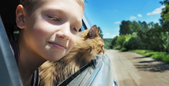 Happy boy and cat look out the car window on moving day!