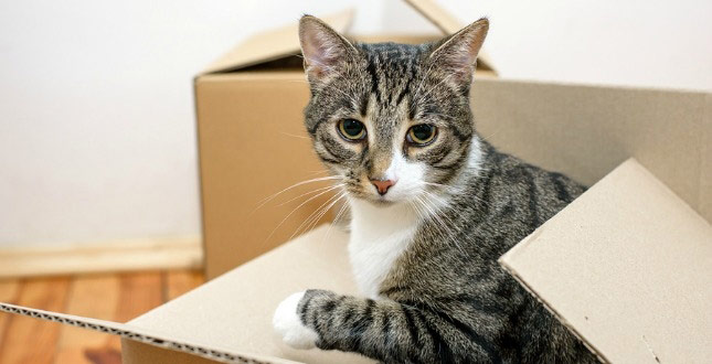 A cat sits in a cardboard box after moving day.