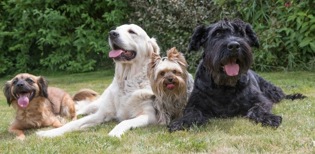 Does your dog play with other dogs? The canine influenza shot may be worth considering.