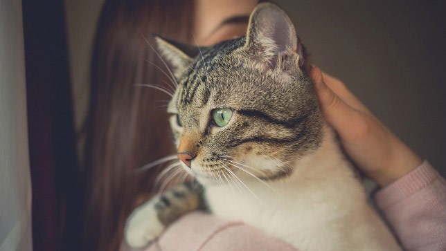 Woman holds cat after giving him meds for cat arthritis