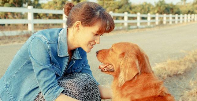 Woman with a golden retriever that has dog arthritis