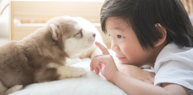 Dakota, the siberian husky puppy, is still too young for puppy shots. He has an adoring friend!