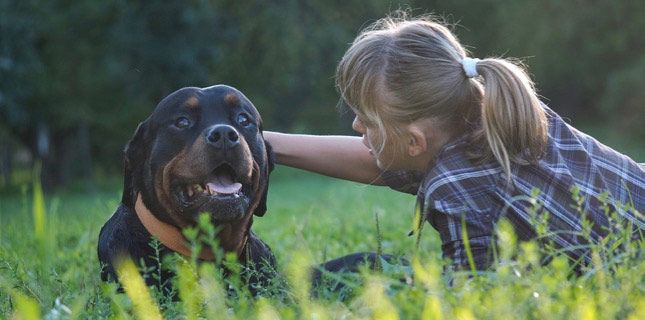 Jamie talks to AJ, her rottie, in a field. Deep-chested dogs, like rottweilers, are prone to dog bloat.