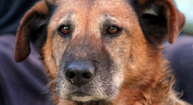 Mocha, the dog, has a chronic condition. Occasionally, she needs drugs for pain.