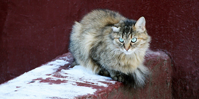 Tigger, the cat, sits on a wall. His long hair masks his recent weight loss.