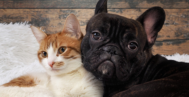 Muggle and Wyatt, a cat and dog, cuddle together.