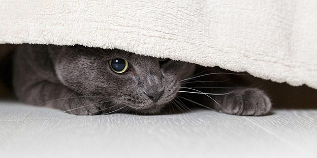 Lewis, a former shelter cat, hides under the bed.
