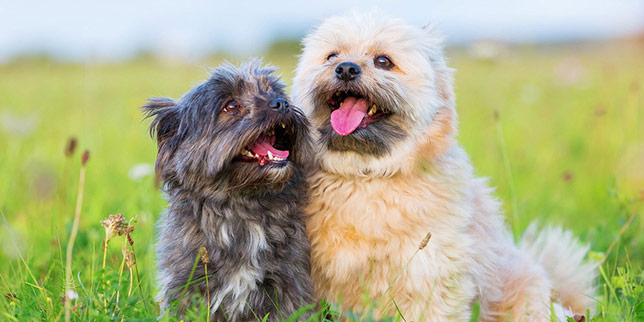 Two pups sit in a field before heading to the vet for a dental evaluation.