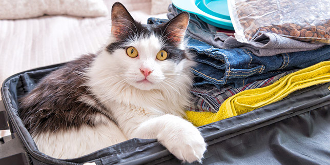 Miles, the cat, sits in a suitcase. His parents gave him special meds for intestinal parasites because he's traveling to states with more parasites.