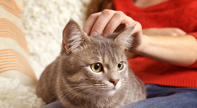 Mocha, the kitty, gets her head scratched.