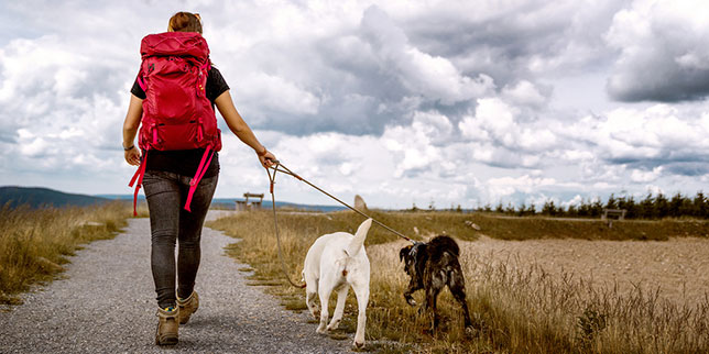 A woman hikes with two dogs in Colorado. Josie is prepared for dog wound injuries with supplies in her backpack.