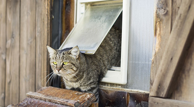 Bandit, the cat, spends time outside, so his family gave him a safe shelter - complete with doggie door.