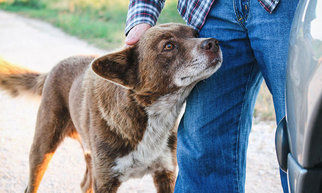 Con of getting an older dog: They may move a bit slower due to arthritis.
