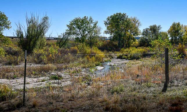The creek runs alongside this dog-friendly trail.