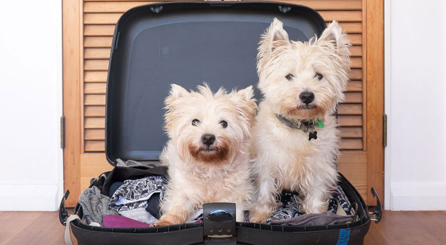 Two dogs in suitcase