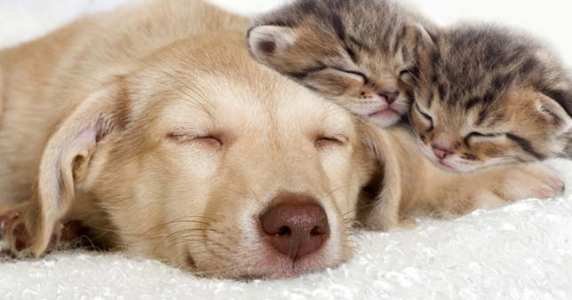 A dog and two kittens cuddle together, completed relaxed