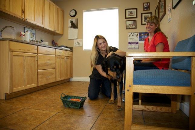 Cherished Companions Animal Clinic exam room
