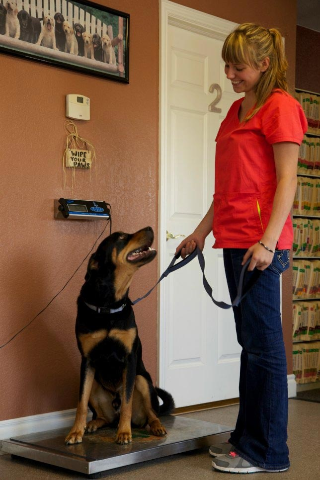 Cherished Companions dog on weight scale