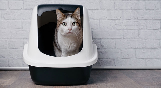 Sophie, the cat, sits in a litter box. She's been leaving blood in her urine in the litter box.