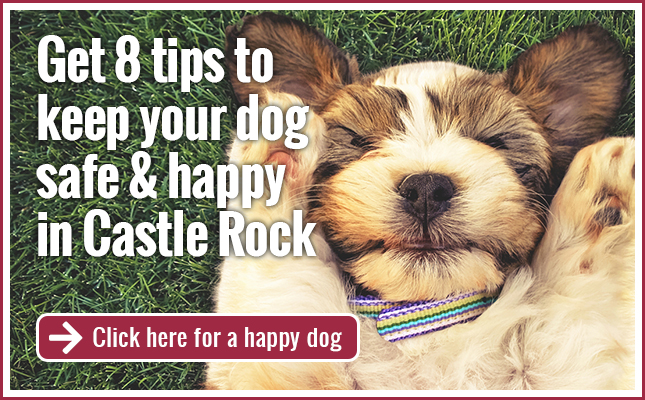 Tips from a Castle Rock veterinarian: 8 tips to keep your dog safe & happy in Castle Rock
