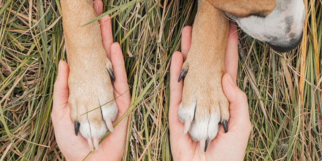 A dog parents hold her dog's paws in her hands.