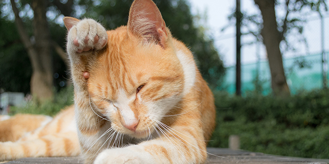 Cat Covering Face with Paws