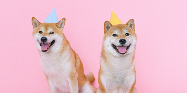 fun ways to celebrate your four-legged friend's special day